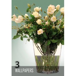 Flowers 3 x 1